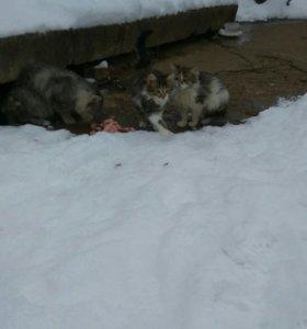 Котята ( кошка,кот), дворовые.Едят мышей.(Бесплатн