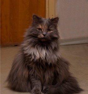Кошка Ксюша ищет семью
