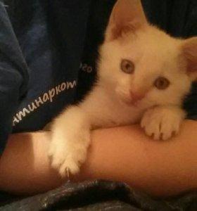 Белый котенок с рыжим хвостиком