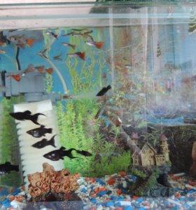 Аквариум 60 л. с комплектацией и рыбками