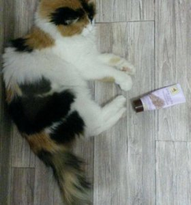 Кошечка в добрые руки