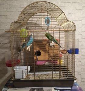 Попугаи вместе с клеткой