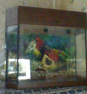 аквариум,