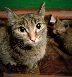 Кошечка и котята