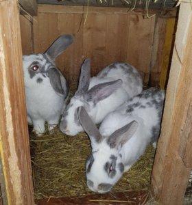Кролики 5 мес