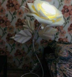 Ночник, ростовые розы