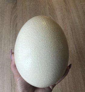 Яйца страуса