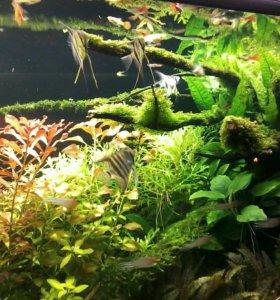 Изготовим любой аквариум