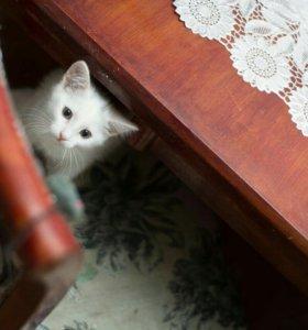 Котёнок - девочка из приюта