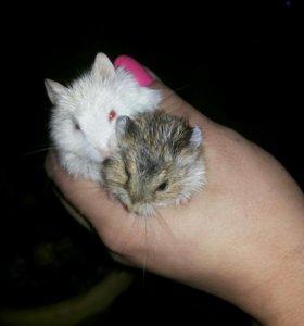 Милые хомячки