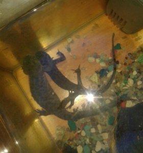 Тритоны с аквариумом