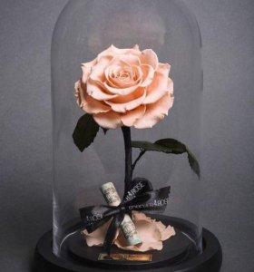 Чудесная роза в колбе