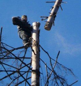 Профессиональная валка деревьев