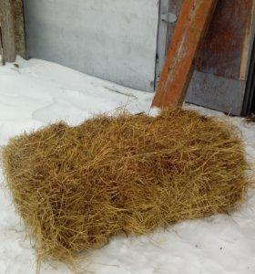 сено луговое в тюках по 20 кг