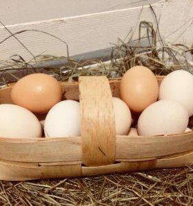 Яйцо деревенское