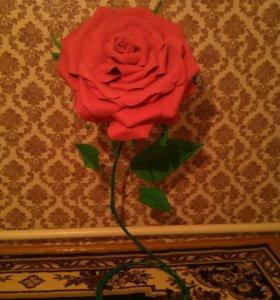 Ростовые розы