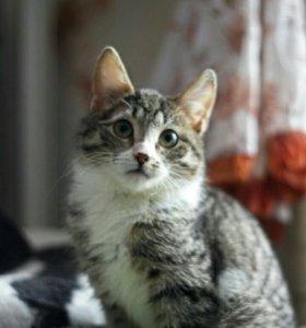 Котенок полосатый девочка 3мес