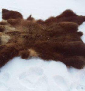 Шкура медведя с когтями