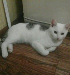 Кот и кошечка 7 месяцев в добрые руки