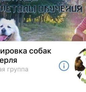 Дрессировка собак.