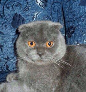Шикарный котик приглашает на вязку