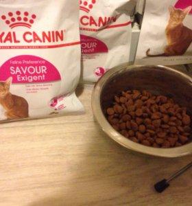 Корм для кошек Royal Canin, для привередливых
