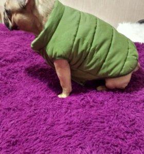 Теплая курточка для фр. бульдога или мопса