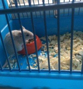 Мышка с клеткой