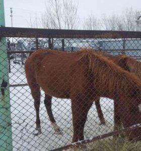 Продаем коней