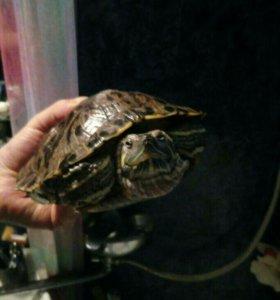 Террариум  150л и морская черепаха