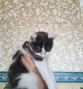 Кошкам нужен дом