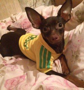Кофточка на маленькую собаку костюм одежда