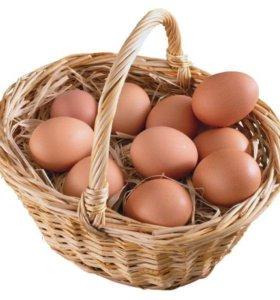 Яйцо домашнее куринное