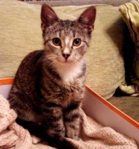 Кошечка 3-4 месяца