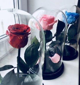 Розы в колбе 🌹