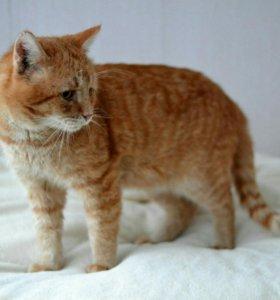 Кот Джонни