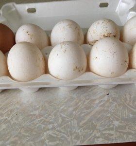 Яйца свойские
