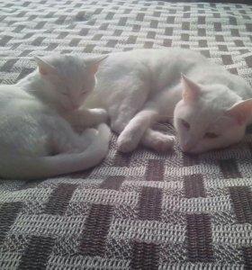 Очаровательные кошечки ищут свой дом .