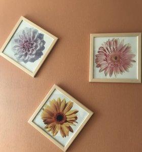 Картины «Цветы»