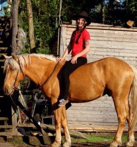 Продам лошадь !