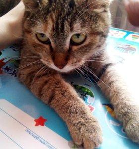 Кошечка и кот 🐈
