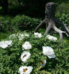 Садовая фигура из дерева