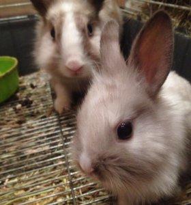 Кролики милые.