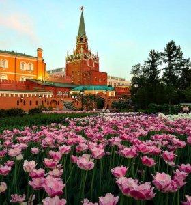 Тур в Москву на 1 мая из Ростова