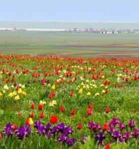 Тур в Элисту на 1 мая из Ростова