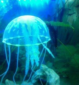 Медуза в аквариум