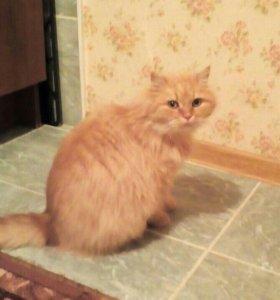 Кошка-красавица в добрые руки