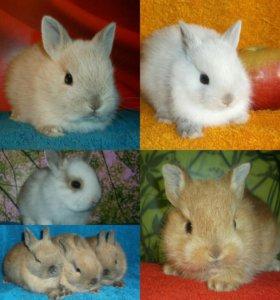 Карликовые зайки. 15 крольчат