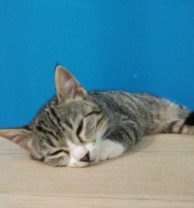 Котенок девочка 2.5 месяца