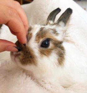 Передержка кроликов